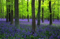 Memories of Bluebells Part 2
