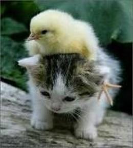 friends are always sweet