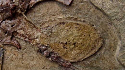 Enlarged image of the fossilized egg