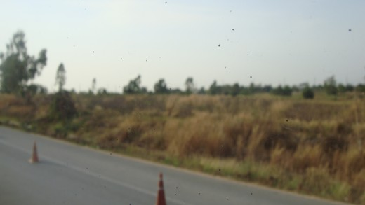 Scenery with dry looking foliage.
