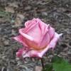 bloe profile image