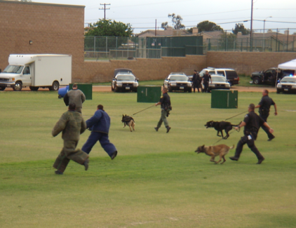 Police and their canine force