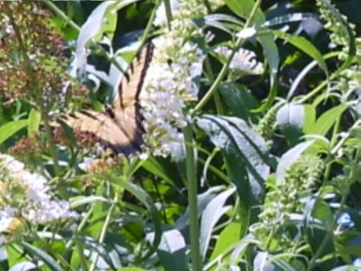 Shrubs and flowers also provides food for birds and butterflies
