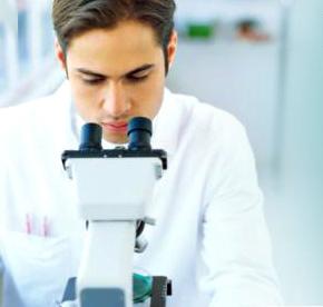 Pathologist studying slides