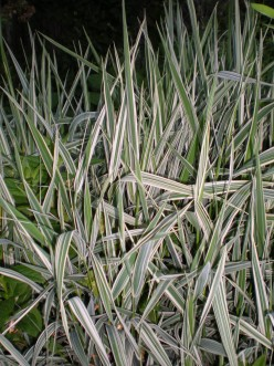 Grass-Grasses-In The Garden-Ornamental-Tall and Short Grass