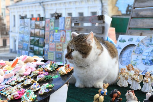 Souvenir stand - this live cat is not for sale! By Alex Radich.
