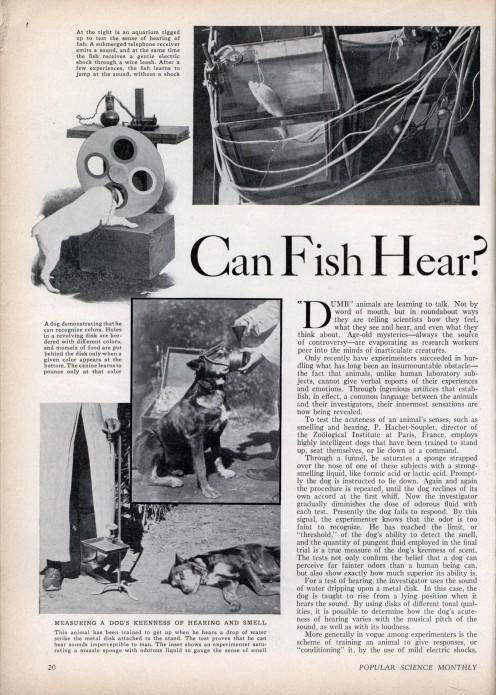 Can Fish Hear?