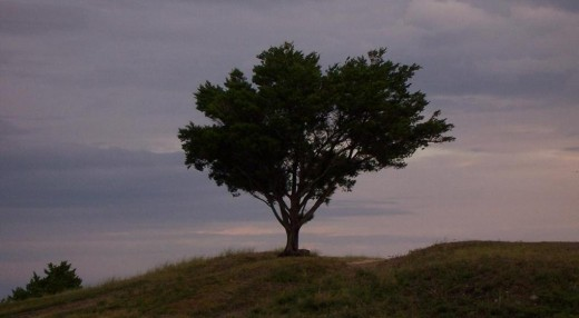 The Lonely Tree was taken while I was on vacation a few years ago. This image is also the cover for my book of poetry: Inner Dreams and Aspirations.