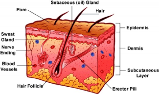 Penetration of three skin layers is important in scar removal