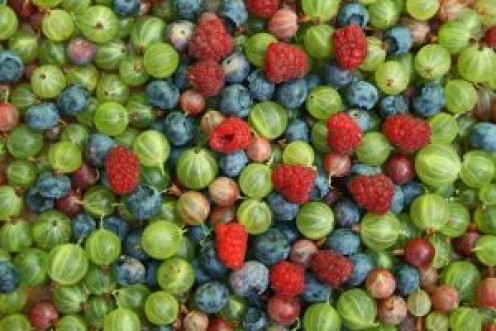 Native Americans have used all sorts of berries in salsas for use with deer and bear meat as well as small game and to help them survive hard winters.