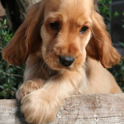 The best breeds of dogs for the family