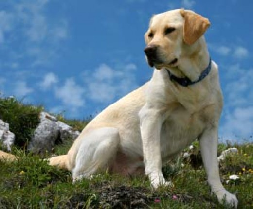 The best breeds of dog for the family