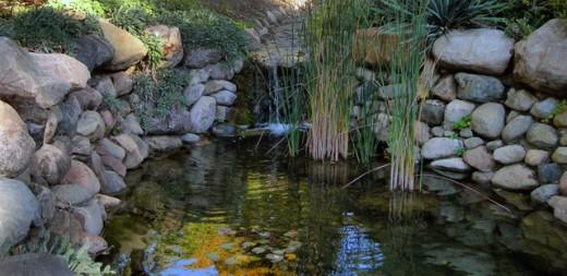 Garden Pond by Shelly D. Kiser