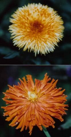 Shakespearean- 23 Plants Found In Shakespeare-flower-seed