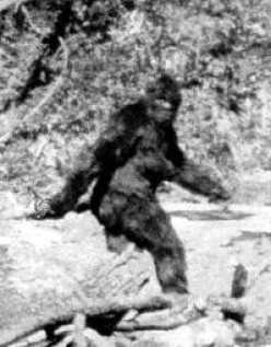 Bigfoot Sightings-Has Sasquatch/Bigfoot been seen in Whitehall, NY?