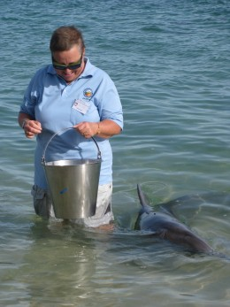 Anita from Switzerland is enjoying getting close to the dolphins with her volunteering work!