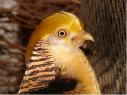 Could you be angry at this bird?