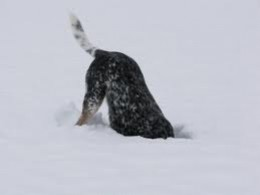 Super fun for this doggie!