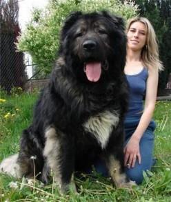 Big Dog! & Robot Dog