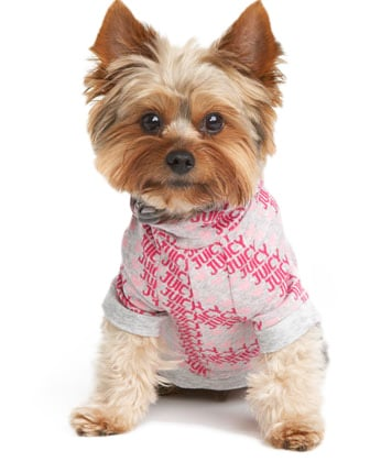 small dog fashion and accessories
