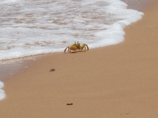 We loved seeing all these crabs on the beach! Too rough for snorkeling tho.