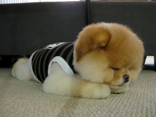Napping in cute clothes