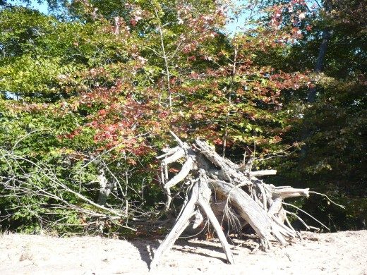 Windswept trees with fall color at the top of Ridge Trail, Ludington State Park