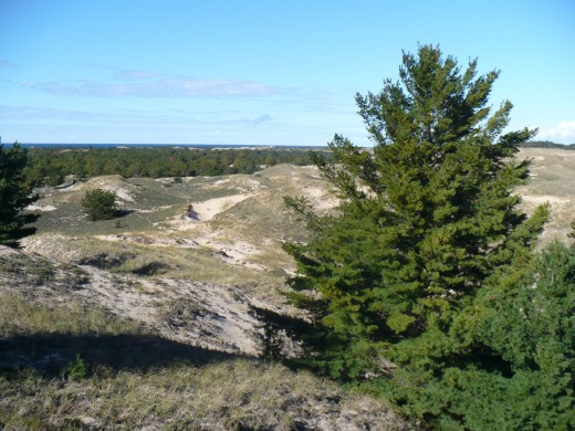 Sand dunes along Ridge Trail with Lake Michigan in t he distance, Ludington State Park