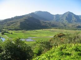 Taro ponds in Kauai's northern coastal area near Hanalie campgound