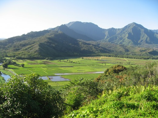 Taro ponds in Kauai's northern coastal area near Hanalie campgound