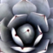 MexicoDavid profile image