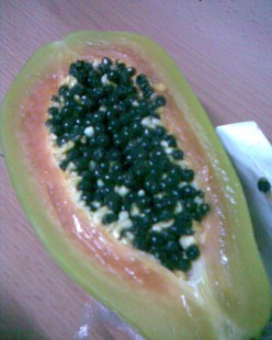 Growing Carica Papaya Trees - How to grow Papaya Fruit Seeds