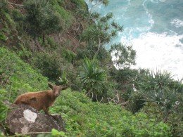 Goats have no trouble grazing on the steep cliffs