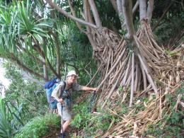 In the forest examining aerial roots