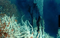 Strange Creatures and Animals that Live near Hydrothermal Vents