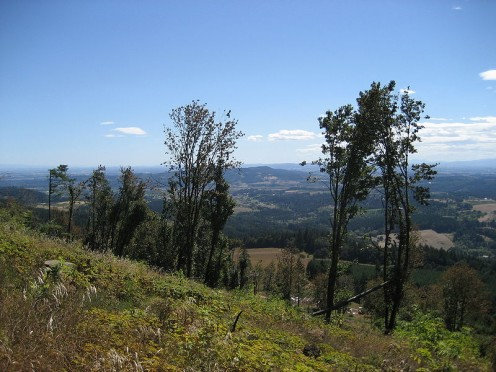 State protected natural area near Hillsboro.
