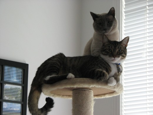 My cats - both adopted cats