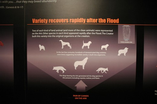 Creationism flirts with evolution in an attempt to explain the obvious question - how many dogs were on the Ark?