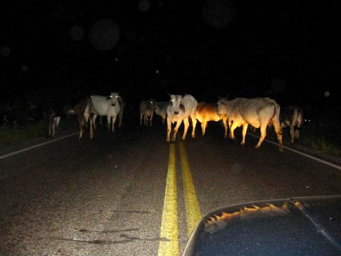 Unexpected obstacles can appear suddenly at night requiring optimum responsiveness.
