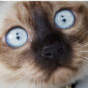 roncitrus profile image