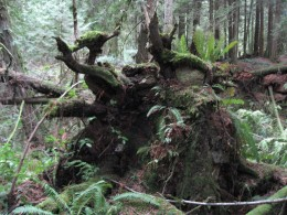 Behind the big stump was Marie's tree fort.Marie crept in and hid her skirt in a hole.