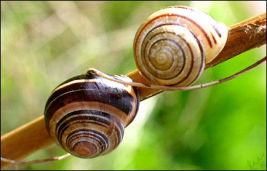 Snails, those slow hermaphrodites, shag any snail that passes.