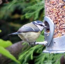 Bird Window Collisions Kill One Billion Birds Per Year