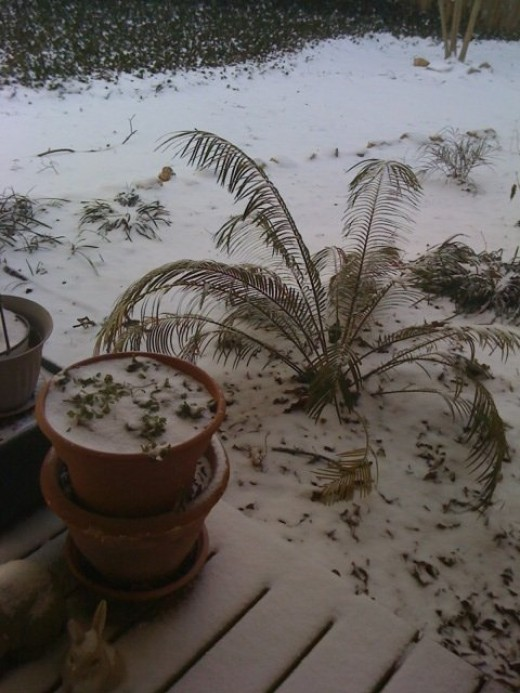 My poor Palm tree looks cold!