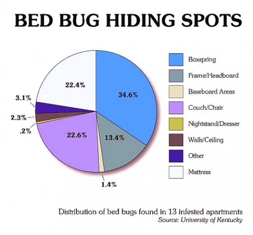 How Can You Catch Bed Bugs