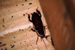 Katsaridaphobia: A Definition & Fear Of Cockroaches