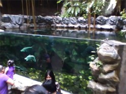 Catfish Tank