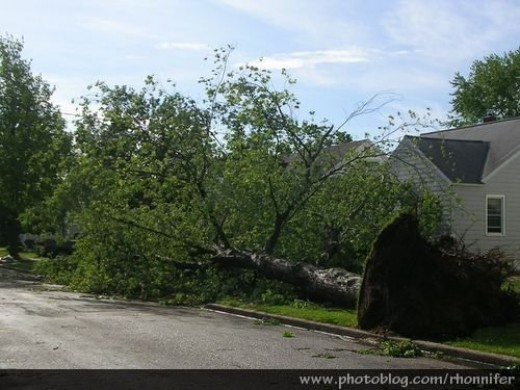 It took weeks to clean up the tree damage all over town.  (Manistee, Michigan)