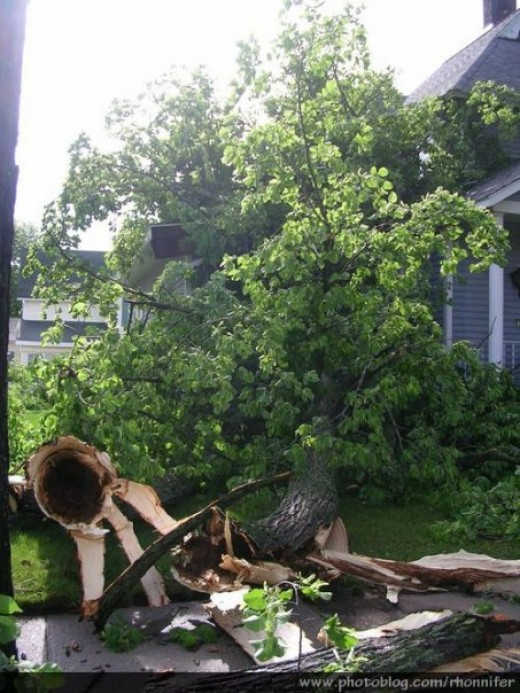 Large limbs were down all over town.  (Manistee, Michigan)