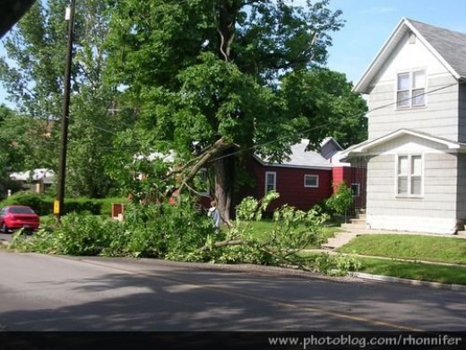 Fallen tree pulling down power lines after the storm.  (Manistee, Michigan)